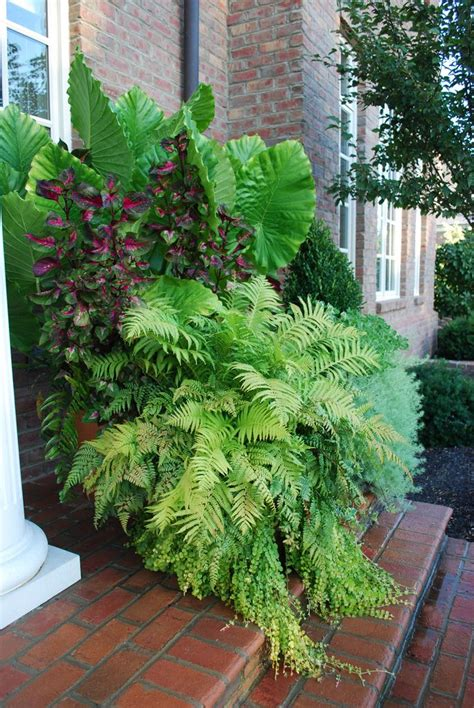 porch container garden 17 best images about ferns on plants for
