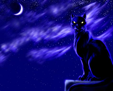 wallpaper cat night cat wallpaper and background image 1280x1024 id 430085