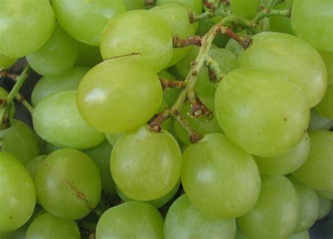 fruit 08 grape greybriar high end raiding us est 11 11 hk 4 4 hm igpx2
