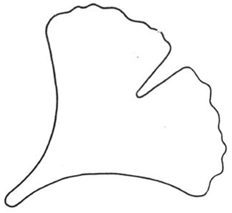 ginkgo leaf coloring page ginko leaf cookie cutter ecran com patterns pinterest