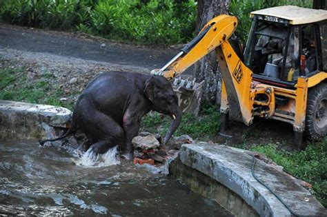 mission elephant rescue mission pictures of the day 31 august 2011 telegraph