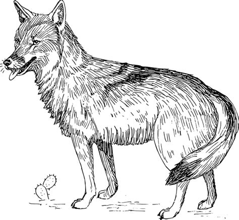 coyote clipart coyote clip at clker vector clip