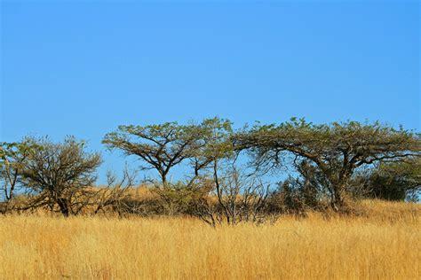 3d Paintings the african bushveld randall langenhoven flickr