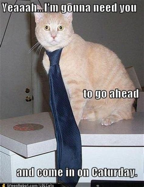 Office Cat by 135 Best Images About Office Humor Work Jokes On