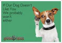 dog mood swings dog snarkecards on pinterest dogs mood swings and love