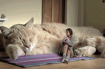 giant house cats life with a giant house cat 1 19892 1346881807 16 big jpg images frompo
