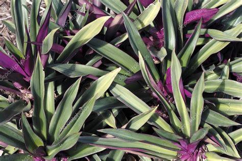 sch 246 n gr 252 n und lila pflanzen stockfoto 169 serenethos 38443659