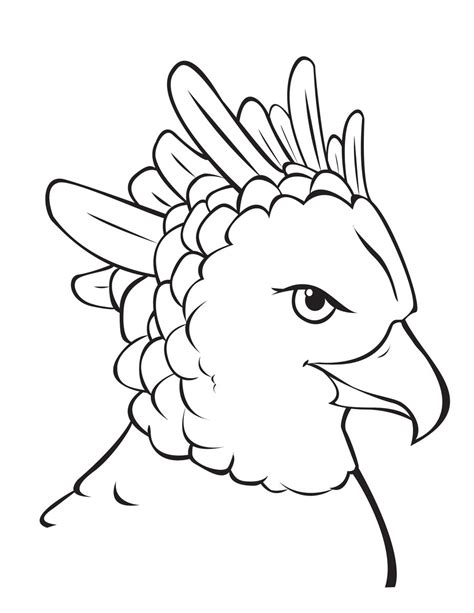 coloring page harpy eagle harpy eagle coloring sheet eagle coloring pages