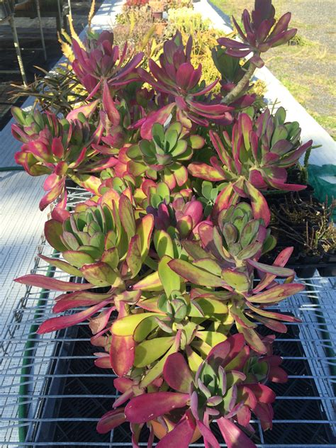 plant lovers central coast plant lovers fair kariong this sat sun