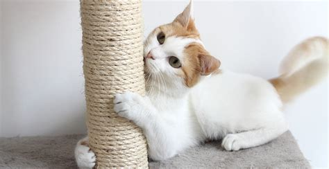 How To Prevent Cat From Scratching by How To Stop Cats From Scratching Furniture The Happy Cat