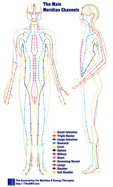 medicine meridians diagram meridians medicine theory description chart