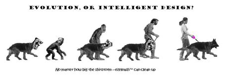 evolution of dogs ezeleash we need your help advertising disasters evolution