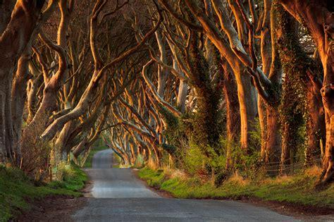 glitter wallpaper northern ireland dark hedges game of thrones by przemysław zdrojewski