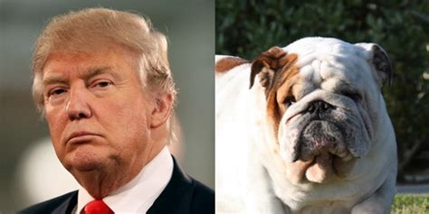 presidential candidates   doggy doppelgangers