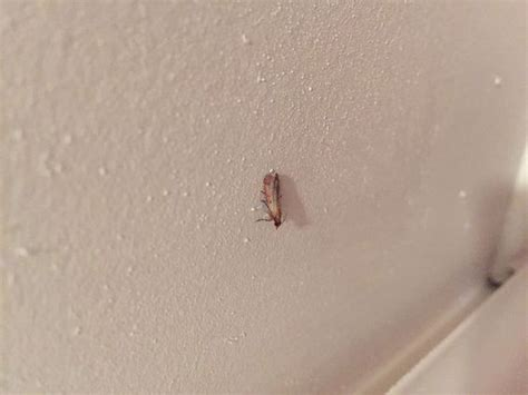 Killing Pantry Moths by How To Get Rid Of Pantry Moths Pantry Moths How To Get