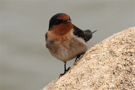 where do birds go when it s windy birds in backyards