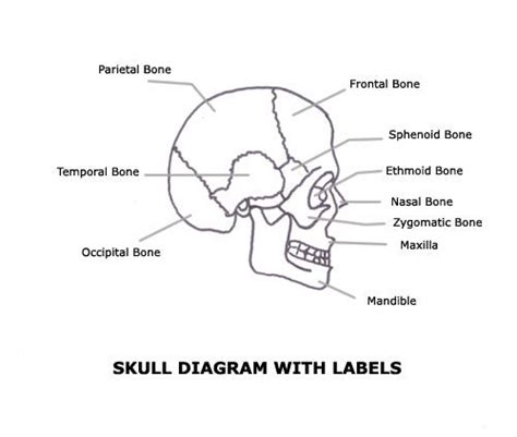 simple diagram with labels a list of bones in the human with labeled diagrams