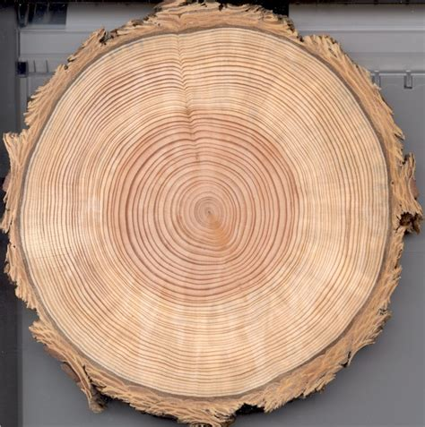 tree cross section treeresearch