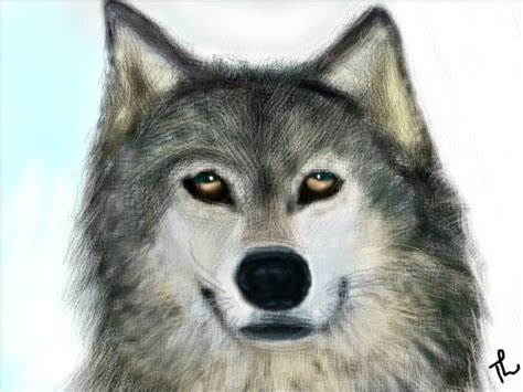 a wolf a wolf slimber drawing and painting