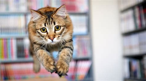 How To Stop A Cat From Jumping On Furniture by Cats Jumping 33