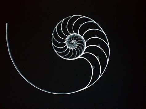 Suzi Irwin Also Search For Nautilus Fibonacci Fibonacci Numbers