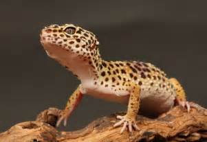 types of pet reptiles dog breeds picture