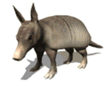 imagenes gif animales imagen zone gt galeria de imagenes gifs animados gt animales