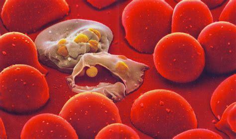 mal di testa e sudorazione malaria trasmissione sintomi complicanze diagnosi