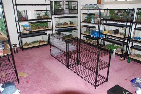 reptile room 1000 ideas about reptile room on crested gecko vivarium and reptiles