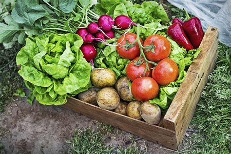 Hybrid Vs Heirloom Seeds Countryside Network Heirloom Vegetable Gardening