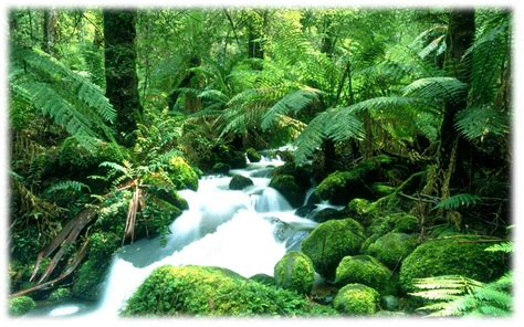 pemandangan kung pinggir sungai tercantik di dunia review ebooks