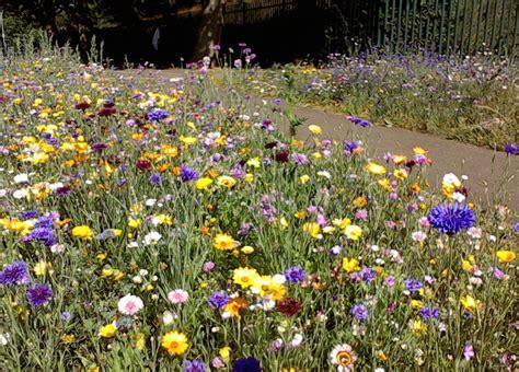 wildflower landscaping wildflowers uk blog
