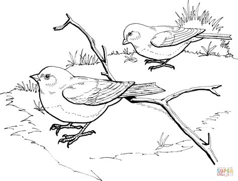junco bird coloring page dark eyed slate colored junco birds coloring page free