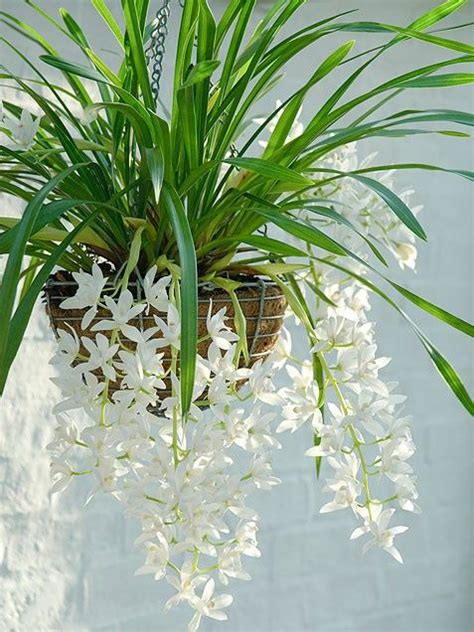 best indoor hanging plants best indoor plants each day flower and plants