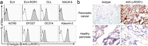 mabs study section evaluation of ror1 expression on tumor cells pancreatic