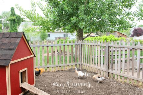 Raising Backyard Chickens Stacy Risenmay Chickens In Your Backyard