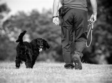walking puppy puppy and walking tips