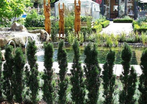 sichtschutz pflanzen hochwachsend s 228 ulenformen verwenden