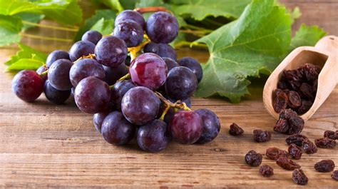 dogs raisins raisin grape toxicity in pets