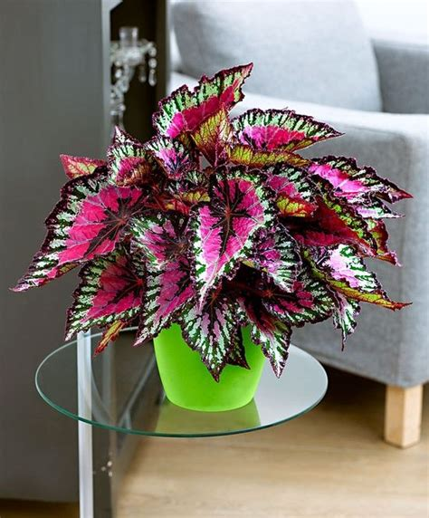 Pretty Indoor Plants | pinterest
