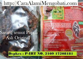 Kapsul Sarang Semut Papua Asli Obat Kanker Tumor Ginjal Paru Hipertens jual khasiat kapsul seduh sarang semut papua asli original cara alami mengobati