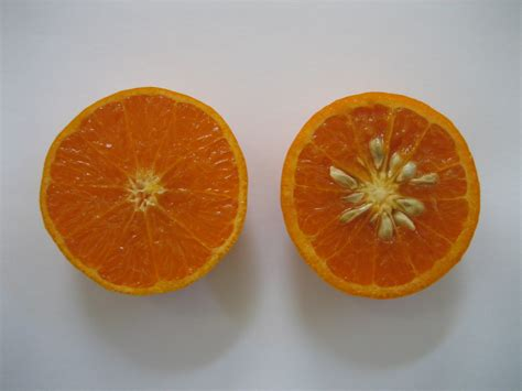 fruits with seeds ucr newsroom uc riverside releases new citrus variety