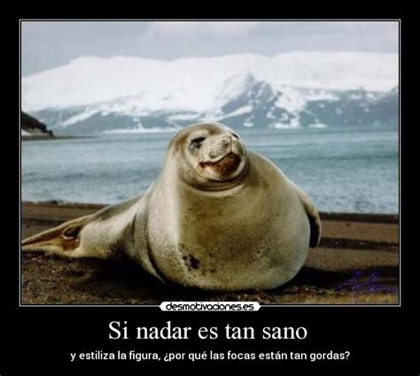 imagenes de negras graciosas im 225 genes y carteles de focas pag 9 desmotivaciones