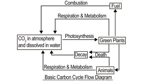 flow diagram of carbon cycle carbon cycle diagram