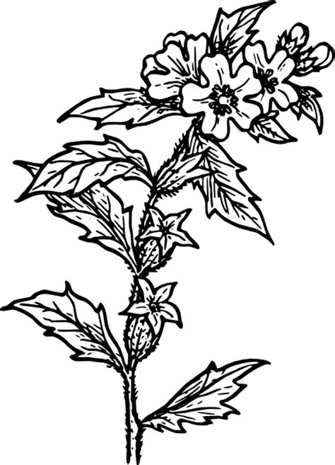 Kontainer Cestine 2270 Green Leaf flower clip at clker vector clip