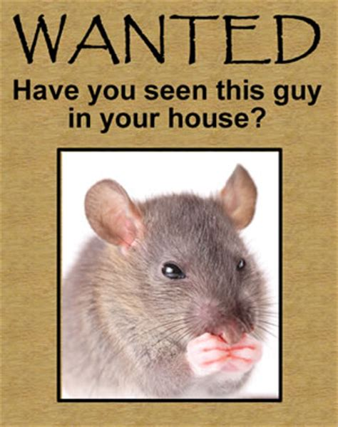 mice in the house mice rodent control cary nc mouse in house squirrel in the attic get rid of mice