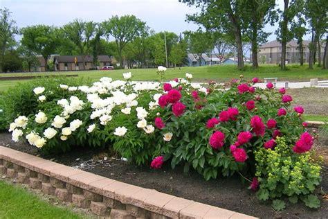 Planting A Perennial Flower Garden Garden Area Descriptions Plant Sciences