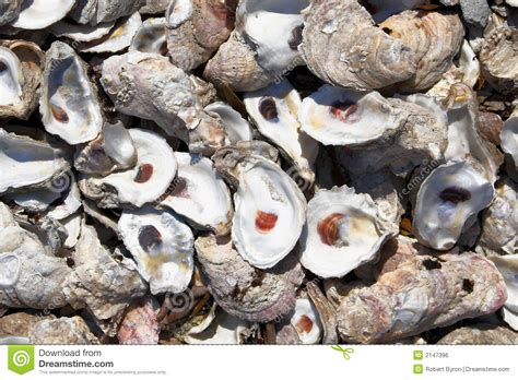 Oyster Shell L by Oyster Shells Royalty Free Stock Image Image 2147396