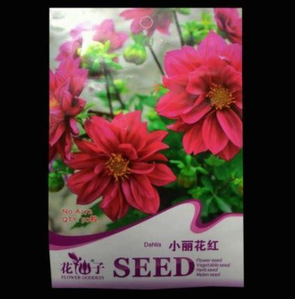 Bibit Bunga Dahlia benih dahlia mini merah 50 biji retail asia bibitbunga