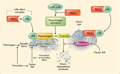 Tpa Also Search For Opinions On Tissue Plasminogen Activator